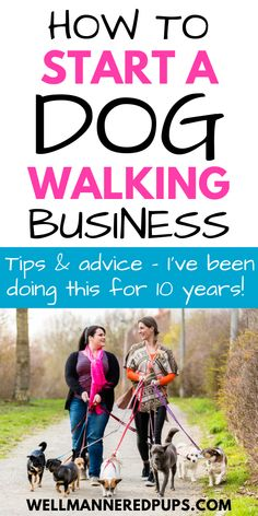 How to start a dog walking business for beginners - Tips and advice from a professional dog walker and pet sitter.