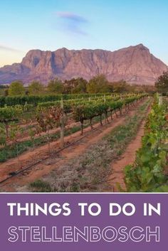 Great post if you are looking for things to do in Stellenbosch. Check it out. Things to do in Stellenbosch Beyond the Wine! Africa Destinations, Travel Destinations, Cool Places To Visit, Places To Travel, Uganda, Wine Safari, Visit South Africa, South America Travel, Africa Travel