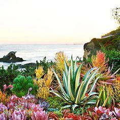 Create a sea-creature succulent garden