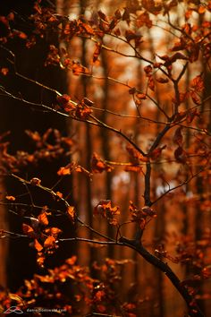fall colors -by ~mystic-darkness