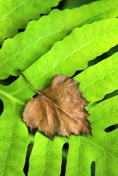 Old Leaf New Leaf Print by Christina Rollo.  All prints are professionally printed, packaged, and shipped within 3 - 4 business days. Choose from multiple sizes and hundreds of frame and mat options.