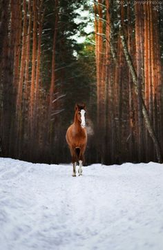 This looks pretty edited... but maybe it is close to spring. It is beautiful either way. The woods, (which is what I think is edited because there is not enough snow on the trees), and the horses breath with the snow makes the colours pop, and the horse stand out beautifully!