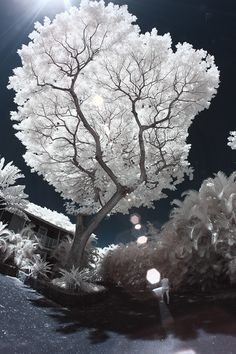 Color Infrared Photography Technique Step By Step