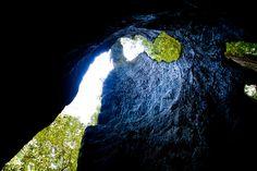 Big Basin by The California Parks Company, via Flickr