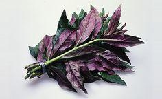 北陸の野菜 - Google 検索