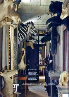 Deyrolle, a Taxidermy Curiosity Shop in Paris is gradually rebuilt after a fire devastated most of the collections last year.  The unusual store has been in business since 1831.
