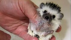 Rub-a-dub-dub. Watch tiny sloths, kittens and hedgehogs in the tub.