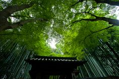 jizouin temple.