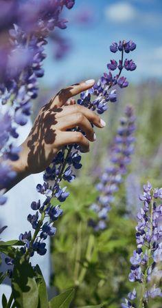 Aesthetic Photography Nature, Nature Aesthetic, Aesthetic Movies, Nature Photography, Aperture Photography, Flower Aesthetic, Beautiful Photos Of Nature, Amazing Nature, Video Nature