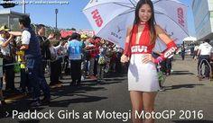 Paddock Girls at Motegi MotoGP 2016