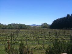 Lynmar Estate Winery in Sebastopol, CA Sample herbs and berries Pinot noir