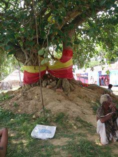 Laakha Bindha Pindi and Tree at Jajpur; photo taken during Yajna at Jajpur Biraja Khsetra performed in June 2014 Durga, June, India, Indie, Indian