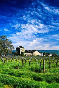 V. Sattui Winery in Napa Valley, California - they have great wines, a great deli and gift shop and the grounds and buildings are beautiful