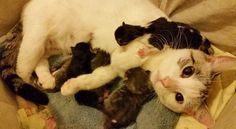 Pregnant Stray Cat Begs a Family to Help Her in Her Hour of Need