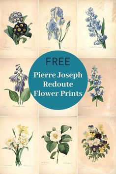 A collection of the most beautiful flower paintings from arguably the most famous botanical artist ever Pierre Joseph Redoute. All free to download #flowers #vintageillustrations Narcissus Flower, Anemone Flower, Free Printable Art, Free Printables, Smelling Flowers, Colorful Parrots, Flower Close Up, Primroses, Envelope Art