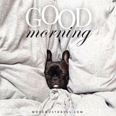 Good morning lovely girls! Hopelijk hebben jullie goed geslapen en staan jullie al in de startblokken…. Want de ALLER leukste musthave collectie komt vandaag online!!! aWe'll keep you posted XOXO www.modemusthaves.com/nieuwsbrief