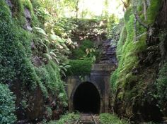 "Glow Worm Tunnel, Somewhere in Sydney(?), more precisely ""The old rail tunnel, bottom of Tunnel Rd, Helensburgh (when you get to the new station, turn around and you'll see the old platform and a restored Helensburgh railway sign)"""