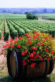 Container gardening is a fun way to add to the visual attraction of your home. You can use the terrific suggestions given here to start improving your garden or begin a new one today. Your garden is certain to bring you great satisfac Country Farm, Wine Country, Country Life, Country Living, Container Plants, Container Gardening, Wine Vineyards, Deco Nature, In Vino Veritas