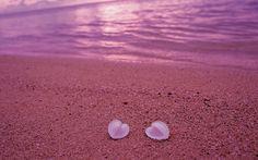 Shells Pink Sands Beach - Bahama