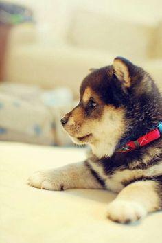 @kaufmannspuppyt  adorable puppy
