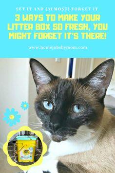 the 25 best litter box smell ideas on pinterest litter box cat litter boxes and hidden. Black Bedroom Furniture Sets. Home Design Ideas