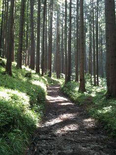 Hiking_wandern: Götzis - Vorarlberg / Austria Foto @Tschola