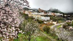 Almendros en flor en la comarca de Filabres-Alhamilla, en Almería