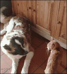 Oh no it's the cat. Is he gonna beat me up again i hope he doesn't beat me up againYAY.