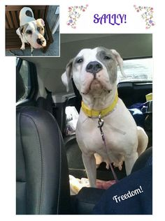 """SALLY SAVED FROM DEATH ROW. FREEDOM! Sally is on her way!! Happy rest of your life sweetheart. Thank You """"Amsterdog"""". NYC. URGENT DEATH ROW DOGS. - Cath Beevers - Google+"""