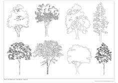 Free CAD Blocks - Trees 02   First In Architecture