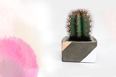 Post image for DIY: Cement Planter For Spring