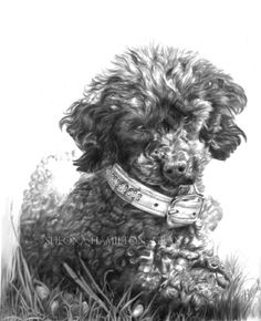 """Paula"", Pencil on Paper.     This drawing looks JUST like my little poodle, Fliggle. :)"
