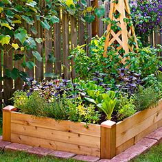 raised bed with vegetables and obelisk