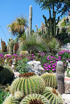 Australian Desert Plants and Cactus Cacti And Succulents, Planting Succulents, Planting Flowers, Australian Desert, Australian Garden, Cactus House Plants, Indoor Cactus, Cactus Cactus, Cacti Garden