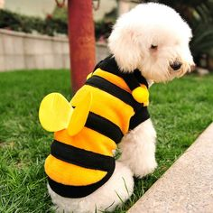 Cute bee Funny Dog Clothes Winter Pet Clothing Cosplay Costume for Dogs Coat Hoody Cat Doggy Puppy Chihuahua Clothes outfit Pet Puppy, Pet Dogs, Dogs And Puppies, Pets, Cheap Dog Clothes, Pet Clothes, Chihuahua Clothes, Puppy Coats, Cute Bee