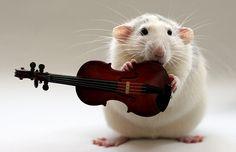 A rat holds a violin in one of the incredible pictures of Ellen Van Veelen