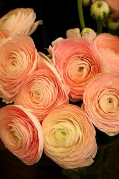 Peach shades - Ranunculus - Flowers and Fillers - Flowers by category   Sierra Flower Finder