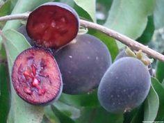 Ceylon gooseberry fruit images wallpaper