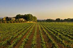 Torres China se consolida como la segunda importadora de vinos en el mercado asiático tras 15 años de actividad https://www.vinetur.com/2014091516729/torres-china-se-consolida-como-la-segunda-importadora-de-vinos-en-el-mercado-asiatico-tras-15-anos-de-actividad.html