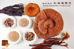 This are the different sorts of Reishi we are able to produce... of course not all of them are on the picture but we can sort them in 3 categories: Red, Deer Horn Shaped and Hybrid。。。当社が生産している霊芝の原料
