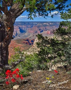 Grand Canyon Wilderness - South Bass Trailhead - Gary Randall