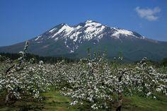 5月22日(土曜)晴れF田氏、O根氏と三人はるばる青森まできたのだから、もうひとつの日本百名山である岩木山(1625m)に登らないわけにはいきません。幸い...