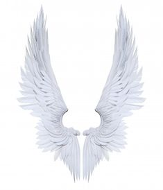 Illustration Angel Wings, White Wing Plumage Isolated On White Background White Wings, Black Wings, Angel Wings Png, Lucifer Wings, Angel Artwork, Wings Drawing, Angel And Devil, Angels And Demons, Beautiful Birds