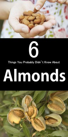 grow almonds,almond seed,almond tree for sale,almond fruit tree,growing almond trees,almond tree nut,almond tree in bloom,the almond tree,