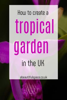 A look at home to create a tropical and gorgeous garden here in the UK with simple styling and awesome flowers and hot gardening tips #garden #gardening #gardeningtips #gardenhacks #tropicalgarden Tropical Paradise, Tropical Garden, Tropical Plants, Waterfall Features, Natural Furniture, Drip Irrigation System, British Garden, Bamboo Fence