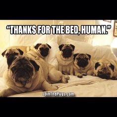 침대의 정복자.
