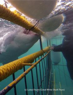 Shark cage diving is an awesome experience from both above and below the surface.   Join Great White Sharks today