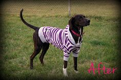 Pink Hound Designs: Repurposing a sweatshirt into a dog hoodie