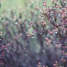 rainy spring bokeh      #photography   #bokeh