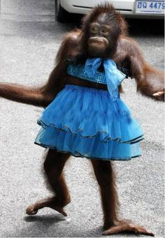monkey dressing funny For more funny pictures, visit http://funnyneel.com/funny-pictures http://FunnyNeel.com ). Follow us www.pinterest.com/webneel/funny-pictures